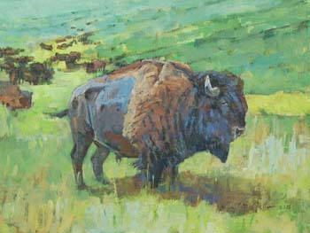 Bison Bull at Custer State Park, Morning