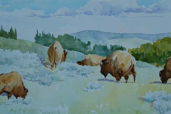Buffalo on Mary Mountain (Yellowstone National Park)